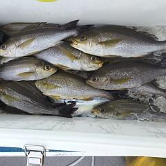 6月 28日(日) 午前、午後・イサキ釣りの写真その4