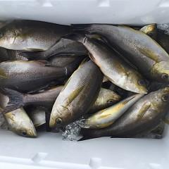 6月 28日(日) 午前、午後・イサキ釣りの写真その5