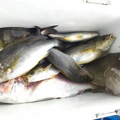 6月 29日(月) 午前、午後・イサキ釣りの写真その3