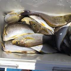 6月 29日(月) 午前、午後・イサキ釣りの写真その7