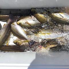 6月 29日(月) 午前、午後・イサキ釣りの写真その8