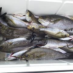 7月5日(日)午前・午後便・イサキ釣りの写真その5