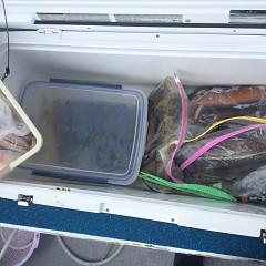 7月 31日(金) 1日便・スルメイカ釣りの写真その7