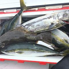 8月 3日(月) 午前便・タテ釣りの写真その7