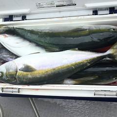 8月 3日(月) 午前便・タテ釣りの写真その8