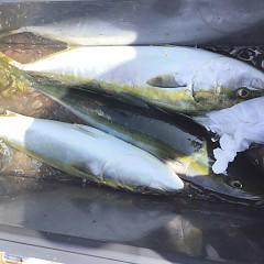 8月 23日(日) 午前便・タテ釣りの写真その5