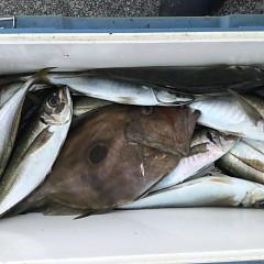 8月 24日(月) 午前・タテ釣り 午後・アジ釣りの写真その1