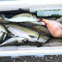 8月 24日(月) 午前・タテ釣り 午後・アジ釣りの写真その2