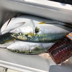 8月 26日(水) 午前便・タテ釣りの写真その2