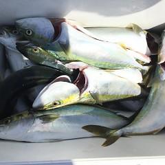 8月 30日(土) 午前便・タテ釣りの写真その2
