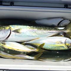8月 30日(土) 午前便・タテ釣りの写真その3