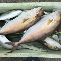 9月11日(金)午前便・タテ釣りの写真その4