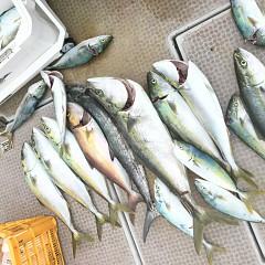 9月11日(金)午前便・タテ釣りの写真その5