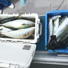9月11日(金)午前便・タテ釣りの写真その7
