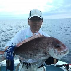 9月 13日(日) 午後便・ウタセ真鯛の写真その1