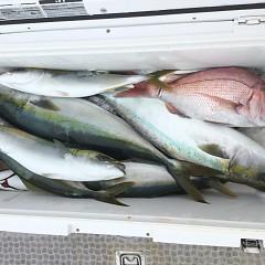 9月 13日(日) 午前便・タテ釣りの写真その11