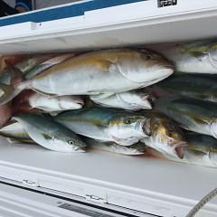 9月 13日(日) 午前便・タテ釣りの写真その12