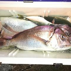 9月 13日(日) 午後便・ウタセ真鯛の写真その6