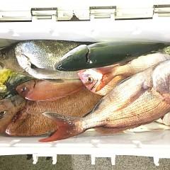 9月 13日(日) 午後便・ウタセ真鯛の写真その8
