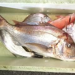 9月 13日(日) 午後便・ウタセ真鯛の写真その9