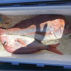 9月  14日(月) 午前便・タテ釣りの写真その2
