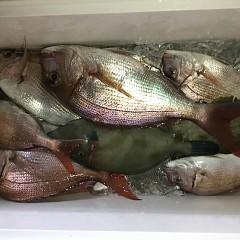 9月 16日(水) 午後・ウタセ真鯛の写真その4