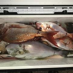 9月 17日(木) 午後便・ウタセ真鯛の写真その5