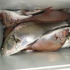 9月 17日(木) 午後便・ウタセ真鯛の写真その7