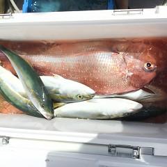 9月 18日(金) 午前・タテ釣り 午後・ウタセ真鯛の写真その2