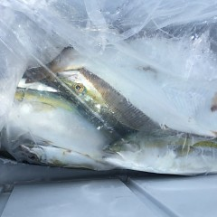 9月 18日(金) 午前・タテ釣り 午後・ウタセ真鯛の写真その6