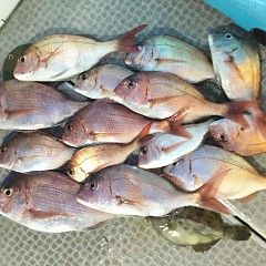 9月 18日(金) 午前・タテ釣り 午後・ウタセ真鯛の写真その8