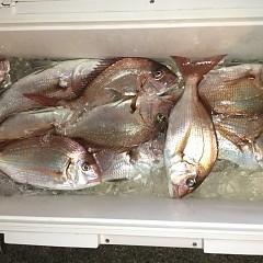 9月 18日(金) 午前・タテ釣り 午後・ウタセ真鯛の写真その9
