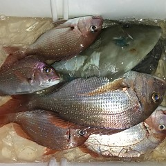 9月 18日(金) 午前・タテ釣り 午後・ウタセ真鯛の写真その10