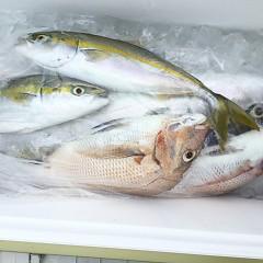 9月 19日(土) 午前・タテ釣り 午後・ウタセ真鯛の写真その3