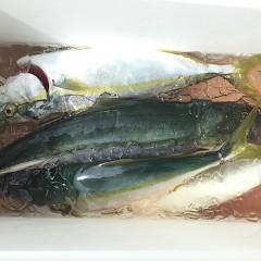 9月 19日(土) 午前・タテ釣り 午後・ウタセ真鯛の写真その4