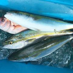 9月 19日(土) 午前・タテ釣り 午後・ウタセ真鯛の写真その5