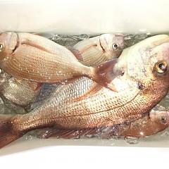 9月 19日(土) 午前・タテ釣り 午後・ウタセ真鯛の写真その6