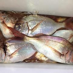 9月 19日(土) 午前・タテ釣り 午後・ウタセ真鯛の写真その8