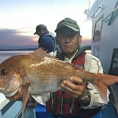 9月 21日(月) 午後便・ウタセ真鯛の写真その2