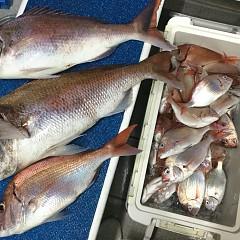 9月 21日(月) 午後便・ウタセ真鯛の写真その8