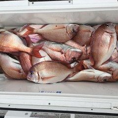 9月 22日(水) 10時出船・ウタセ真鯛の写真その2