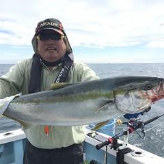 9月 26日(土) 午前便・ウタセ真鯛の写真その1