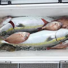 9月 26日(土) 午前便・ウタセ真鯛の写真その9