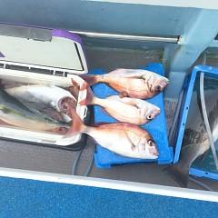 9月 26日(土) 午前便・ウタセ真鯛の写真その10