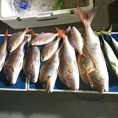 9月 27日(日)ウタセ真鯛の写真その1