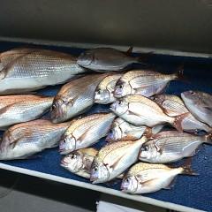 9月 27日(日)ウタセ真鯛の写真その2