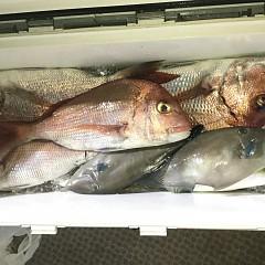 9月 27日(日)ウタセ真鯛の写真その3