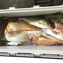 9月 27日(日)ウタセ真鯛の写真その4