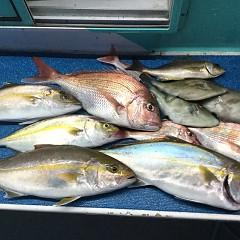 9月 28日(月) 午前・タテ釣り 午後・ウタセ真鯛の写真その11