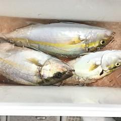 9月 28日(月) 午前・タテ釣り 午後・ウタセ真鯛の写真その12